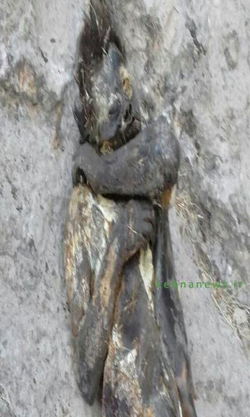 کشف  جسدی در لوداب که وحوش آن را خورده بودند+ تصویر
